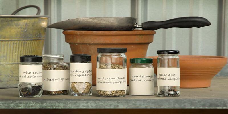 Quy trình bảo quản hạt giống hiệu quả